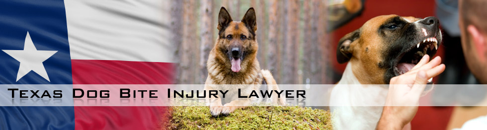Texas Dog Bite Injury Lawyers